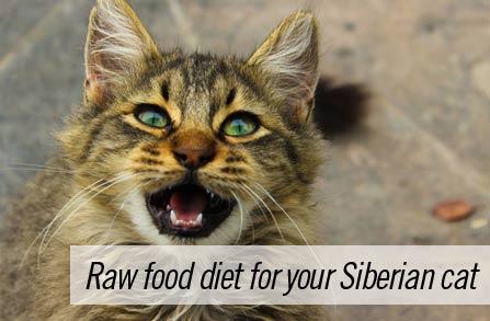 Feeding your Siberian cat raw food diet