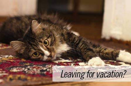 Who to leave your cat with when you go on vacation