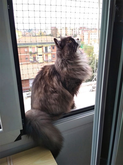What would be the thing that you love most about your Siberian kitty?