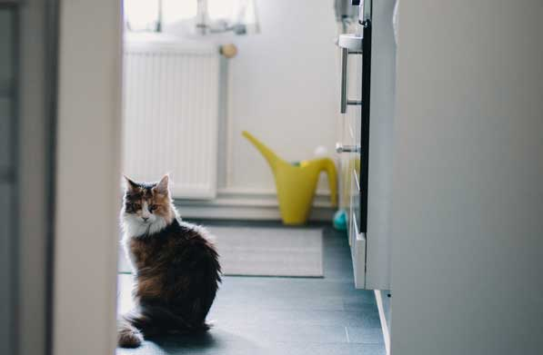 Siberian cat in bathroom